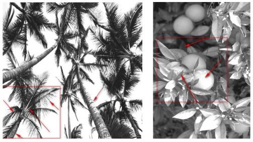 Линеарное и пятновое изображение